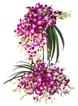 3 Feet Orchids Arrangement