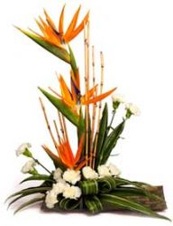 Arrangement of white Carnations and Bird of paradise