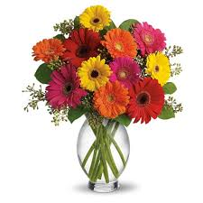 Two Dozen Gerberas in a Vase