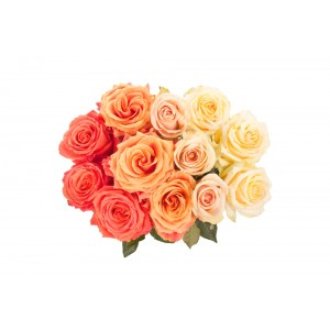 Ombre Shades Orange pink white 24 Roses bouquet
