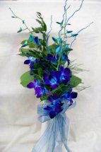 6 Blue Orchids Hand Tied