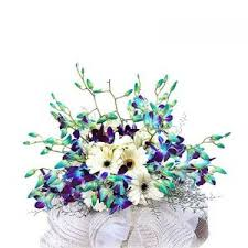 10 Blue orchids and 6 white gerberas basket