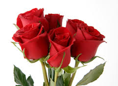 send exotic flowers to bangalore