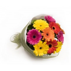 8 Gerberas bouquet