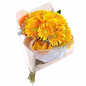 Dozen Yellow Gerberas